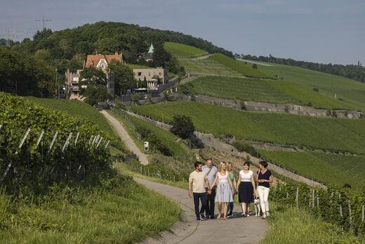 Stein-Wein-Pfad mit Schlosshotel Steinburg im Hintergrund (c) FWL, Würzburg, Holger Leue