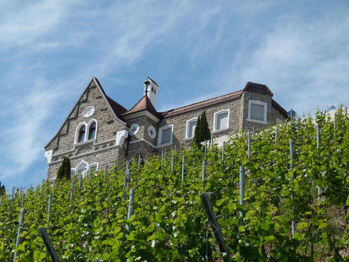 Foto: Reben und Schlosshotel Steinburg (c) Weingut Reiss