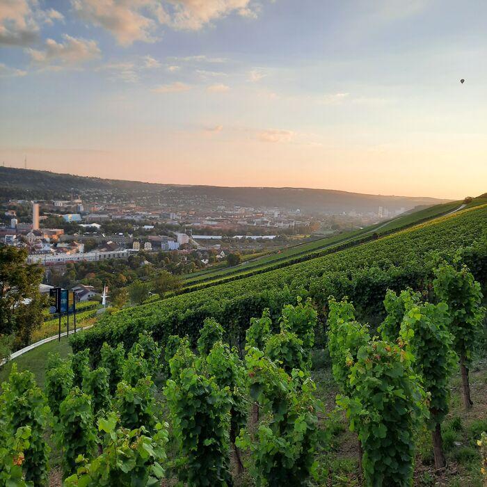 Weinlage Würzburger Stein-Harfe